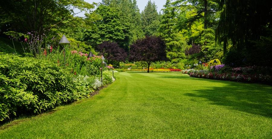 escarificar cesped jardin